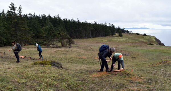 Project team members looking for potential Taylor's Checkerspot caterpillar release sites. Photo by Chris Junck