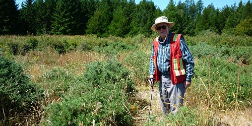 Art with invasive Gorse in Garry Oak habitat on federal lands