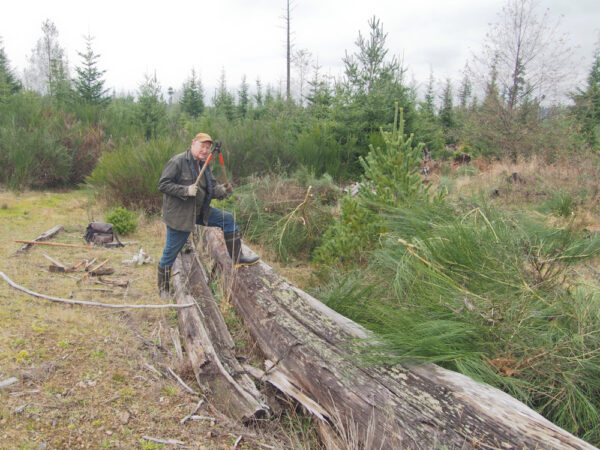 Volunteers and contractors are removing encroaching vegetation to reclaim clearings in the Butterfly Reserve area of Denman Provincial Park. Photo: A. Fyson