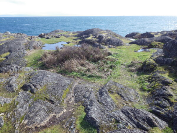 Rare ecosystems themselves, the mix of vernal pools and rocky balds at Harling Point provide critical habitat for several of Canada's rarest species (photo: C. Junck, GOERTS)
