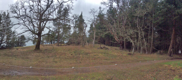 Garry Oak and Arbutus trees on right are showing signs of stress from competition. Photo: BC Parks