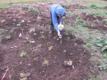 Kristen Miskelly sowing native seeds in freshly weeded areas.