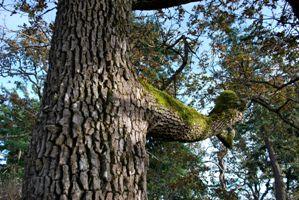 Highrock Park in Esquimalt is a favourite place