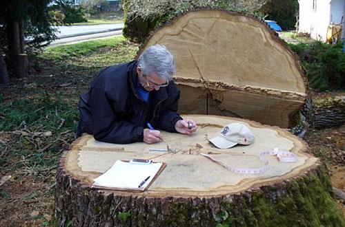 counting oak rings