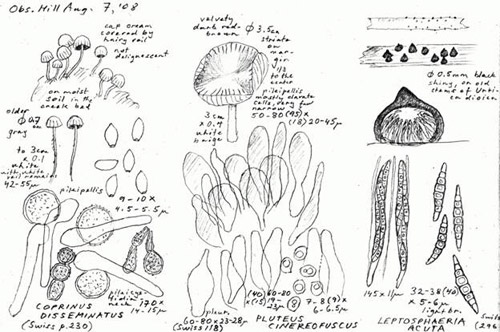 A page from Oluna's sketch book