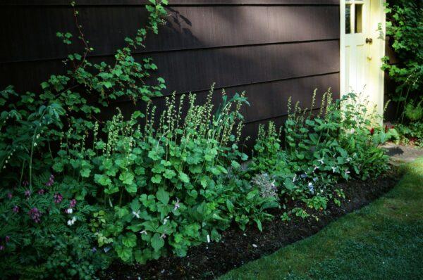 Shade garden. Photo: Brenda Costanzo
