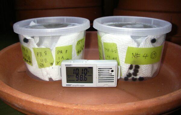 TCB larvae in diapause chambers. Photo: C Junck/GOERT