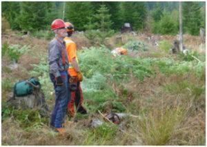Volunteers and contractors improved more than 4 ha of meadow habitat for butterflies. Photo: Peter Karsten