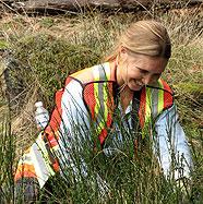 CRD Parks volunteer removes broom from Mill Hill