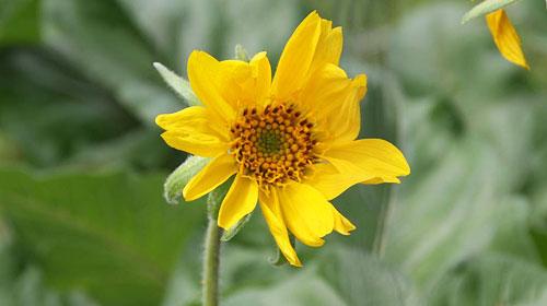 close-up-flower-head