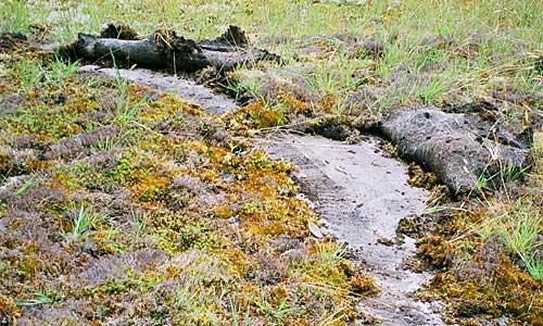 Dirt bike damage in a sensitive ecosystem (photo by Chris Junck)