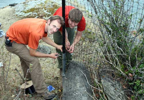 Deer-proof fence being installed by summer co-op students