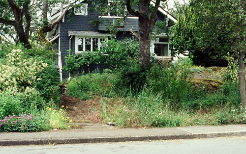 After: native plant garden in spring, with a thicket on the left and the beginnings of a meadow on the right.