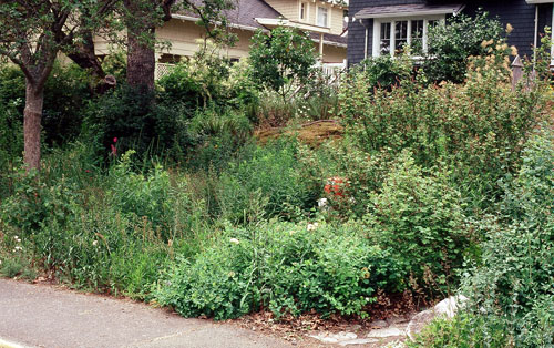 After: the meadow is separated from the thicket on right by a stone footpath. Plants in bloom from top right: oceanspray, red-flowering currant and yarrow.