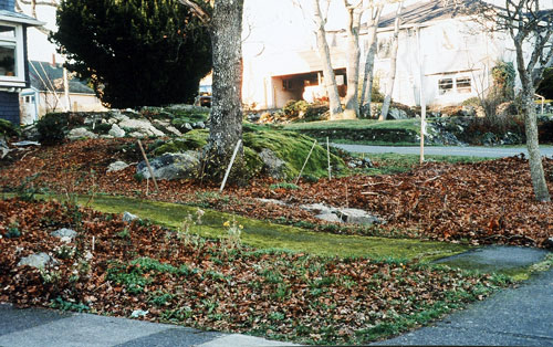Before: in the foreground, natural leaf fall at the site of a future thicket, and in the background, deep sheet mulch prepares the ground for the Garry oak meadow.