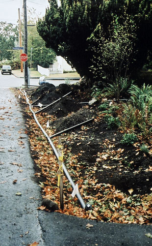 Before: a passive irrigation system is installed to capture rainwater from the sidewalk