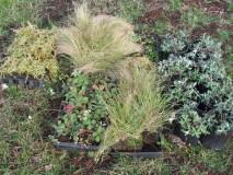 native plants for Heliwell habitat enhancement area_Oct 2015
