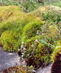 seep garden